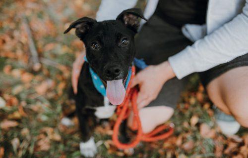 Ak človek pracuje dvanásť hodín denne a chce psa do bytu, pre oboch je to trápenie, hovorí pracovníčka útulku Katarína Ruskovská