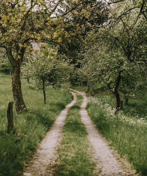Neďaleko Žarnovice vytvorili alej stromov, ktorá spája. Dedinu, lazy aj ľudí naokolo