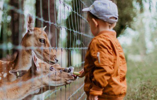 Vzťah k zvieratám sa deti učia najmä od rodičov. Empatia je základ, hovorí Natália Babicová zo Zvieracieho ombudsmana