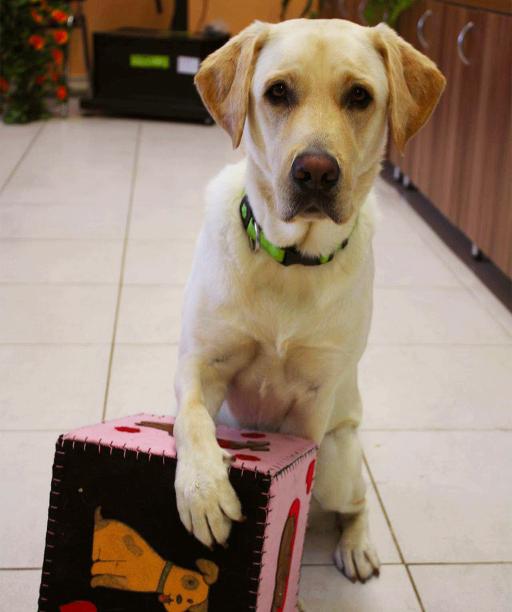 Študenti kynológie získavajú skúsenosti v teréne: so psami pomáhajú opusteným seniorom aj deťom s autizmom