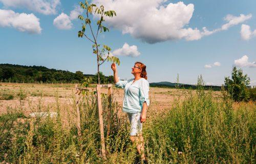Aleje stromov zabránia nárazovým vetrom aj povodniam. Vinosady prišli s unikátnym projektom